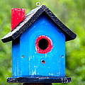 Karon Melillo DeVega - Little Blue Birdhouse
