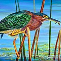 AnnaJo Vahle - Little Green Heron