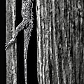 Walt Foegelle - Lizard In Barn Board