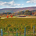 Steven Ainsworth - Loudon County Vineyard II