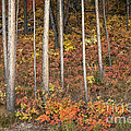 Majestic Autumn In The Grand Tetons by Sandra Bronstein