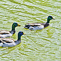 Nadine and Bob Johnston - Mallard Buddies