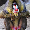 Stacy Siverio - Mandrill