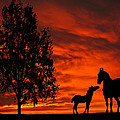 David Dehner - Mare and Foal Sunset...
