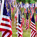 Peter Hogg - Memorial Day Flags