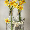 Jacky Parker - Mini Daffs