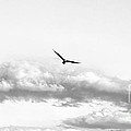 Domenico Guddo - Minimal Flight II