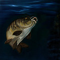 Cynthia Adams - Mirror Carp 4