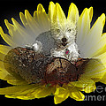 Photography Moments - Sandi - Miss Daisy in a Flower -...