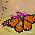 Pam  Holdsworth - Monarch Beauty
