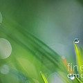 HJBH Photography - Morning dew on grass...