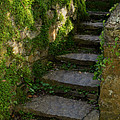 Mossy Steps by Carla Parris