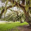 Debra and Dave Vanderlaan - Mossy Trees at Jekyll...