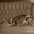 ImagesAsArt Photos And Graphics - My Dog Sleeping On The...