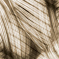 Nature Leaves Abstract In Sepia by Natalie Kinnear