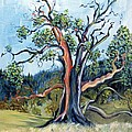 Asha Carolyn Young - Old Madrone Tree in...