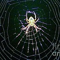 Jackie Burlingame - Old Man Spider
