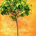 Carol Groenen - Orange Tree at the Palace