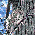 Laurie Tsemak - Owl and Tree Bark Blue