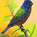 Painted Bunting bird