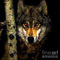 Bob and Nadine Johnston - Painting ... Wolf in...