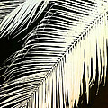 Ann Powell - Palm Frond in Sepia