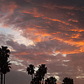 Glenn McCarthy - Palm Sunset - California