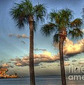 Timothy Lowry - Palms at the Pier