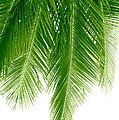 Palms Green by Boon Mee