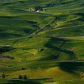 Mike  Dawson - Palouse Green