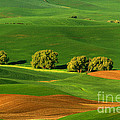 Reflective Moments  Photography and Digital Art Images - Palouse Green