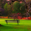 Bruce Nutting - Park Bench