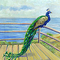 Catherine Garneau - Peacock on the Deck