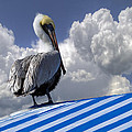 Debra and Dave Vanderlaan - Pelican in the Clouds
