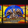 Sally Weigand - Pelicans Stained Glass