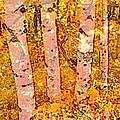 PainterArtist FIN - Pink Birches