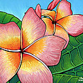 Adam Johnson - Pink Plumeria