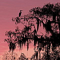 Ellen and Udo Klinkel - Pink Swamp Sunset