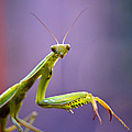 Eric Rundle - Praying Mantis
