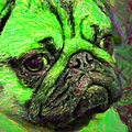 Pug 20130126v4 by Wingsdomain Art and Photography