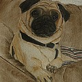 Kelly Mills - Pug dog all ready to...