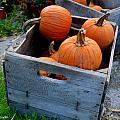 Pumpkins In Wooden Crates by Amy Cicconi