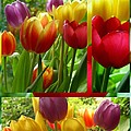 Joan-Violet Stretch - Rainbow Tulip Collage