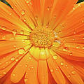 Jennie Marie Schell - Raindrops on Orange...