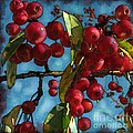 Colleen Kammerer - Red Berries