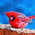 Bruce Nutting - Red Cardinal in the Snow