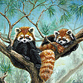 Beverly Fuqua - Red Pandas