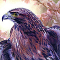 Alan  Hawley - Red Tailed Hawk