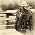 Bob Christopher - Rodeo The Cowboy Way