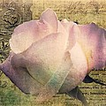 Shirley Sirois - Romance of the Rose